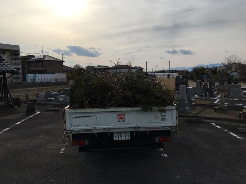 岐阜市の庭木伐採