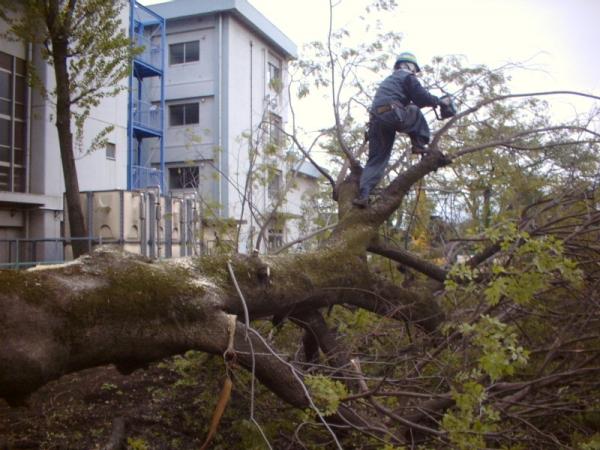 名古屋市の庭木伐採