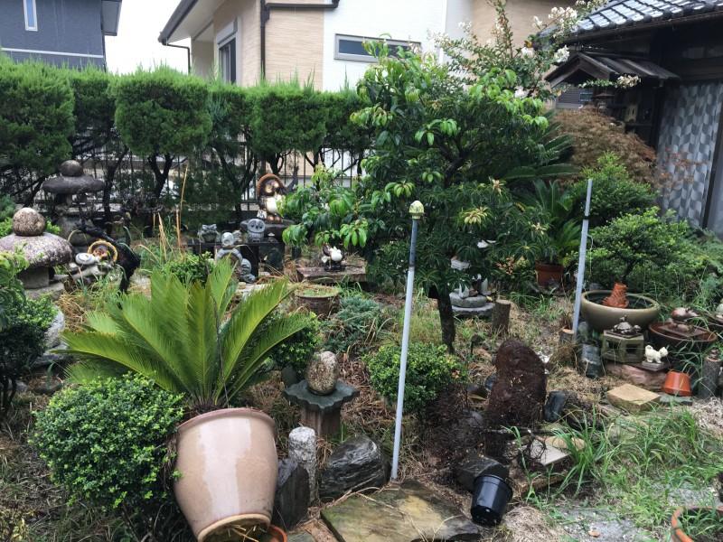 名古屋市南区の庭木撤去お見積り