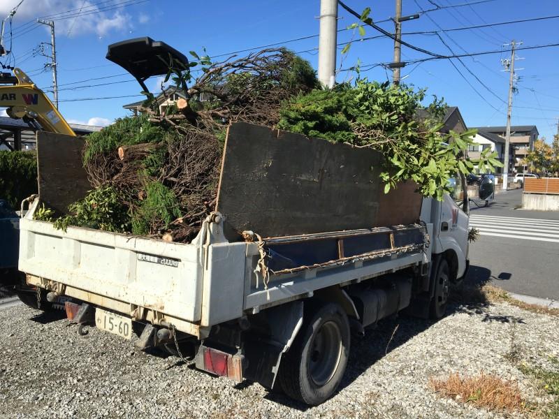 あま市 庭木の伐採