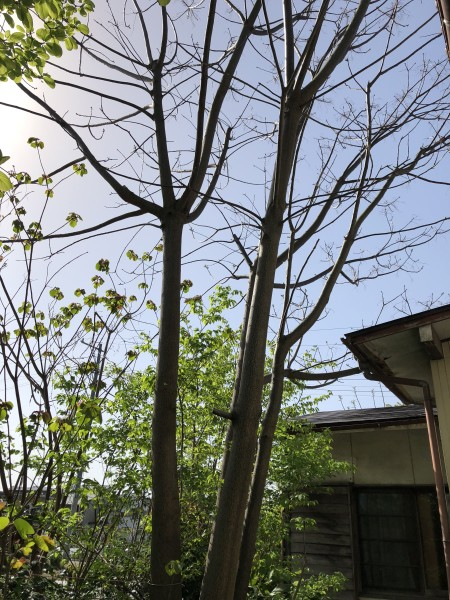 岐阜市 庭木の伐採