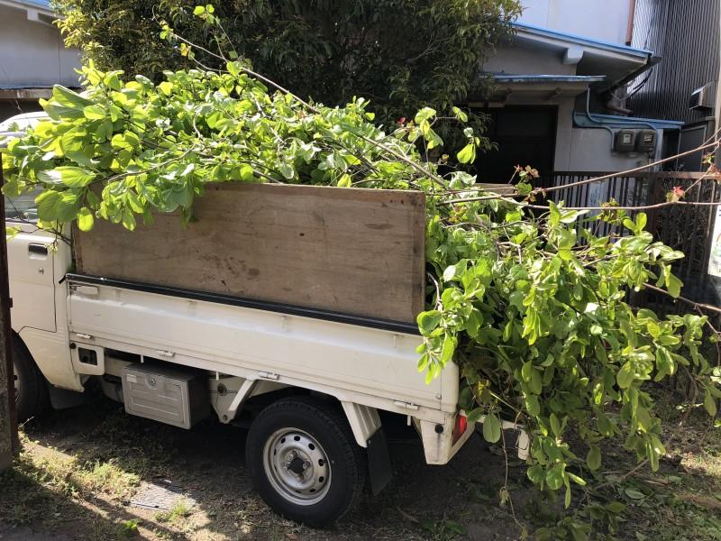 岐阜市|庭木の伐採搬出