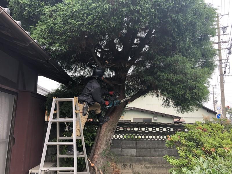 いよいよ着工です|岐阜市の庭木伐採