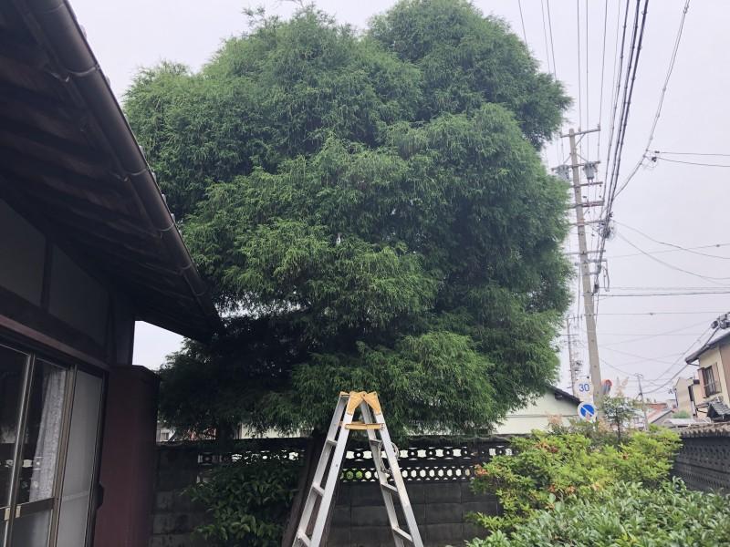着工前 岐阜市の庭木伐採