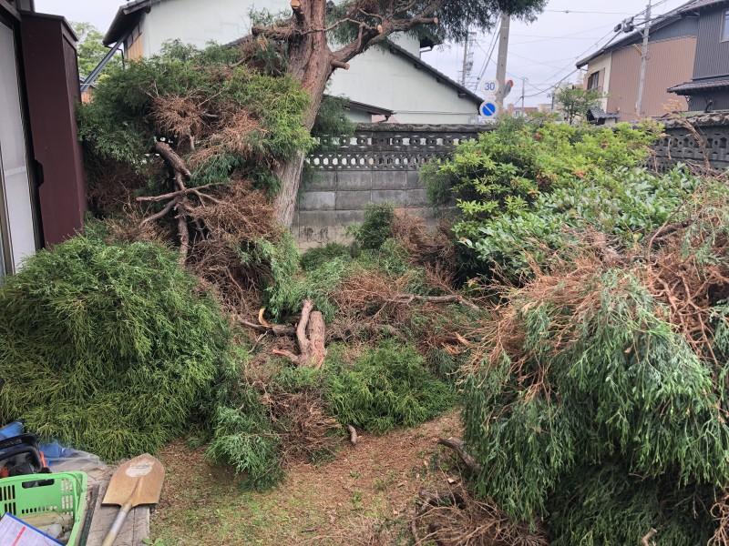 上から順番に枝葉を落としていきます|岐阜市の庭木伐採
