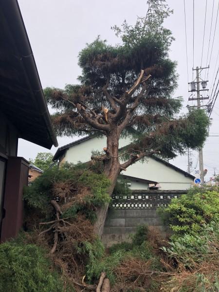 上部半分くらい枝葉を落としました|岐阜市の庭木伐採