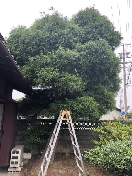 着工前|岐阜市の庭木伐採