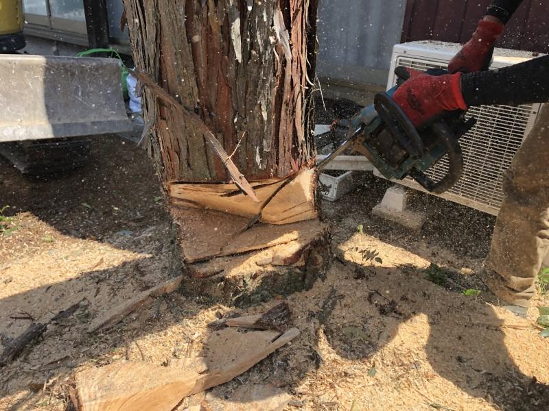 倒す方向を【く】の字に開口します|岐阜市の庭木伐採