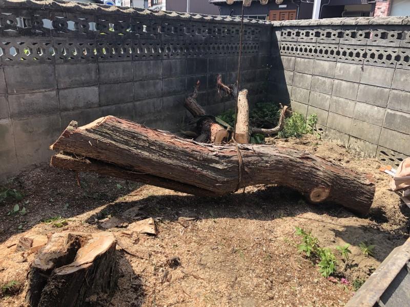 無事に切り倒しました|岐阜市の庭木伐採