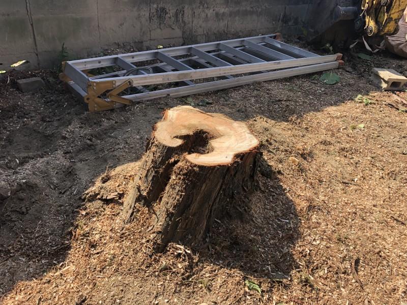 キレイに根元で切断できました 岐阜市の庭木伐採